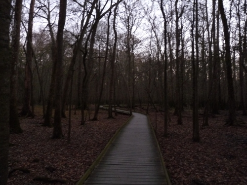boardwalk in Congaree National Park