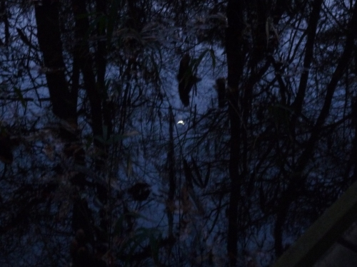 Moon reflected in the swamp at Congaree National Park