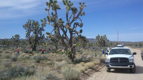 volunteer site at Joshua Tree National Natural Landmark
