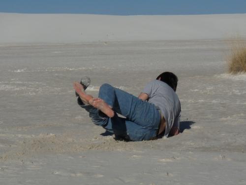 Jay landing on the dunes