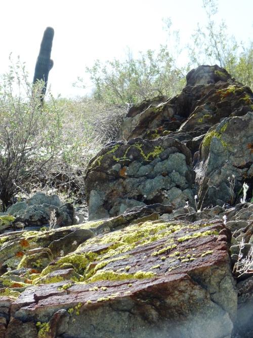 Phoenix Mountain Preserve Trail 100