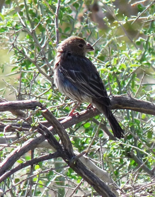bird in Phoenix Mountain Preserve