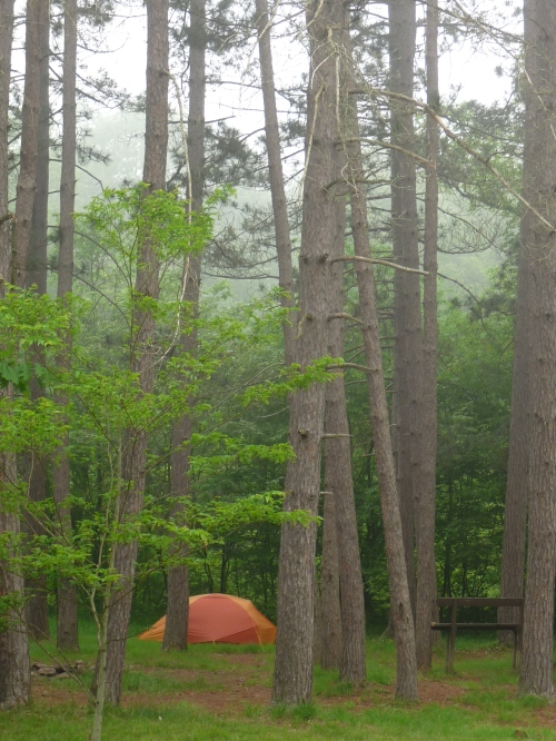 allegheny national forest campsite
