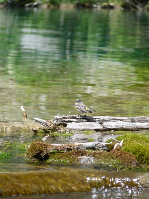 bird at Grassi Lakes, Canmore