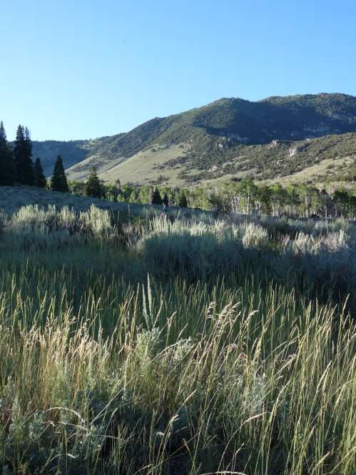 view from Snake Creek Road, Great Basin National Park