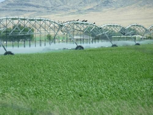 field watering