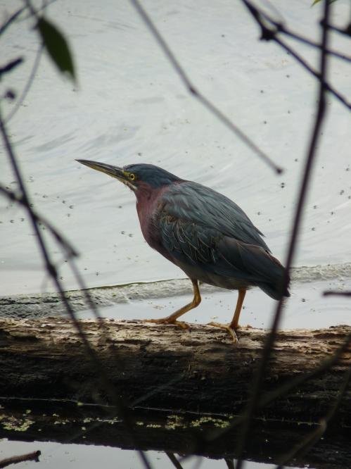 bird at royal lake