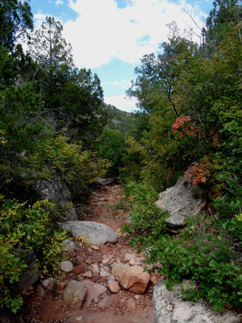 creek on Saddle Mountain Trail