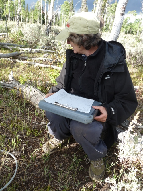 My partner, Donna recording plants we've identified