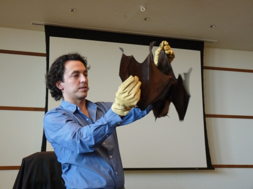 Live bat presentation at the Wildlife Experience