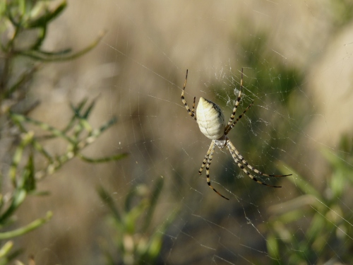 spider in North Fruita desert
