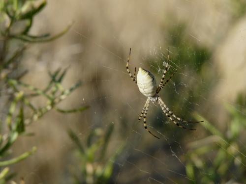 spider in North Fruita desert