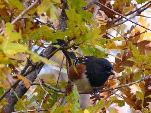 Bird near the Colorado River near Dotsero