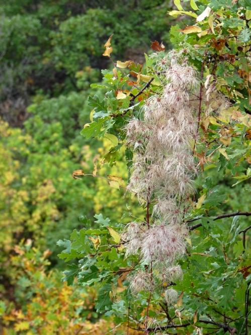 plants in Indian Creek