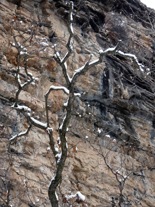 tree on hanging lake trail