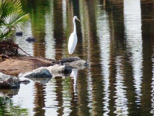 bird at Papago PARK