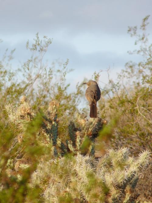 bird in Phoenix Mountain Preserve