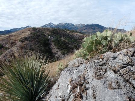 view of the Santa Ritas from AZ trail