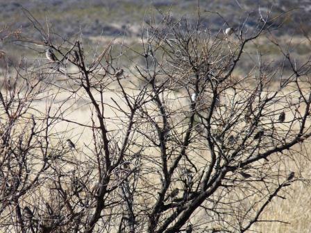 birds on tree in san pedro conservation area