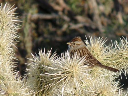 bird on cholla