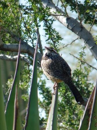 bird on yucca