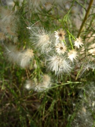 fuzzy plant close up web