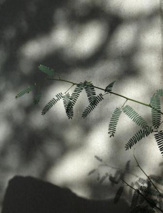 patterns web